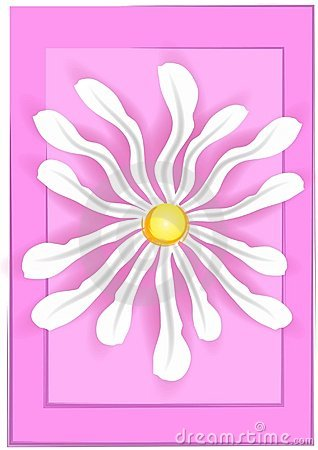 White Daisy on Pink Background