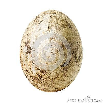 Free White Dirty Egg Stock Image - 105112121