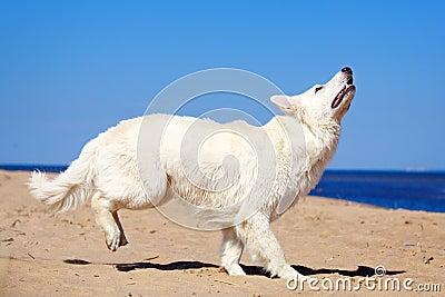 White dog on the beach