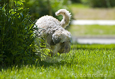 White Dog urinating on plants