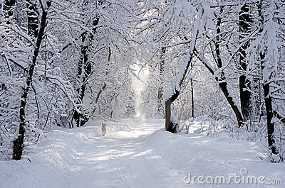 White dog in winter snowy park alley