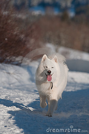 White dog in a winter in white forest