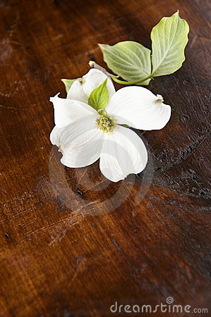 White Dogwood Wood Background