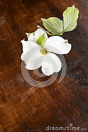 White Dogwood Wood Background