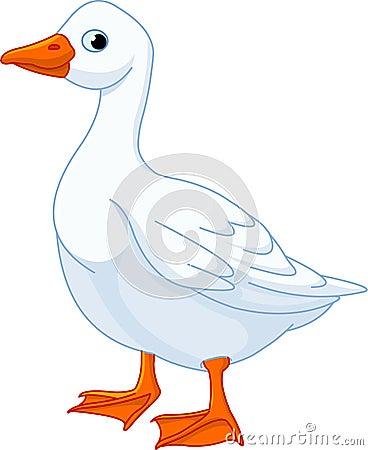 Free White Domestic Goose Royalty Free Stock Photos - 20806688