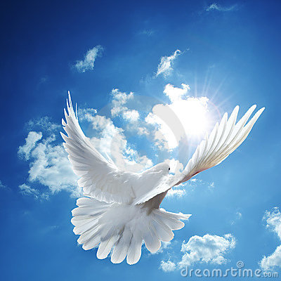 Free White Dove Blue Sky Stock Images - 15528324