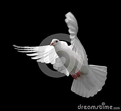 Free White Dove In Flight 9 Royalty Free Stock Photo - 1748045