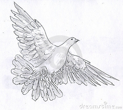 flying dove pencil drawing - photo #11