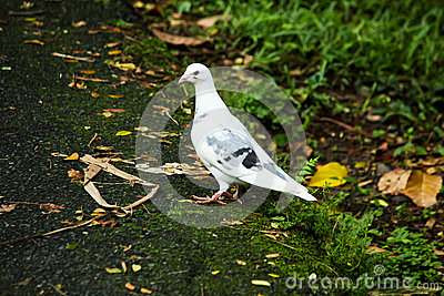 White Dove standing on the side of a street