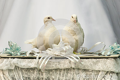 White doves in love