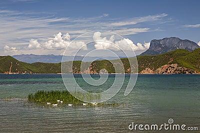 White Ducks in Beautiful Lake