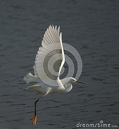 Free White Egret Stock Image - 2676541