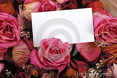 White empty card with dried roses