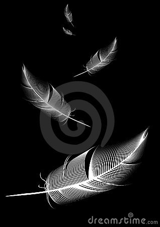 Free White Feather On Black Background Royalty Free Stock Photography - 4767477