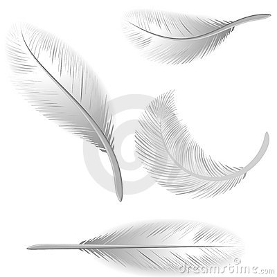 White Feathers Isolated