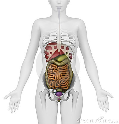 White female figure with abdominal organs