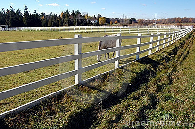 White Fences - Horse