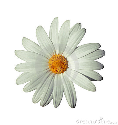Free White Flower Royalty Free Stock Photos - 238058