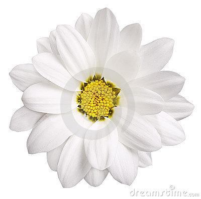 Free White Flower Stock Photography - 3464342