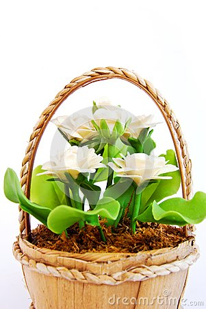 White flower in basket on white background