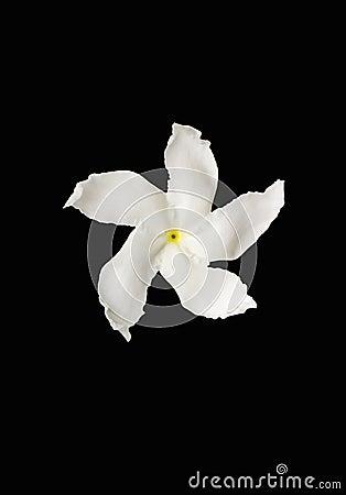White flower on black