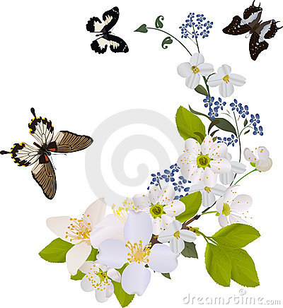 Free White Flower Branches With Three Butterflies Royalty Free Stock Photos - 15547648