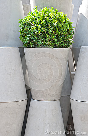 Free White Flower Pots And Green Plant Royalty Free Stock Image - 26985676