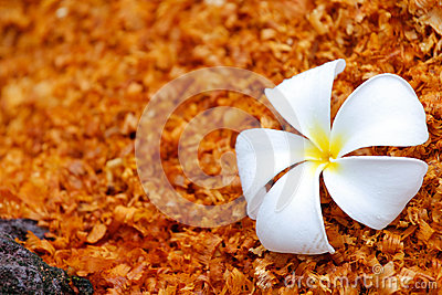 White flower on the sawdust