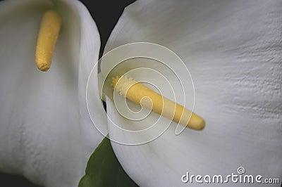 White flower and yellow stamen kew botanical gardens London