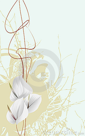 Free White Flowers Royalty Free Stock Photography - 5187797