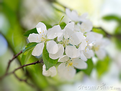 White flowers blooming