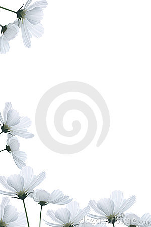Free White Flowers Border Stock Photography - 12062692