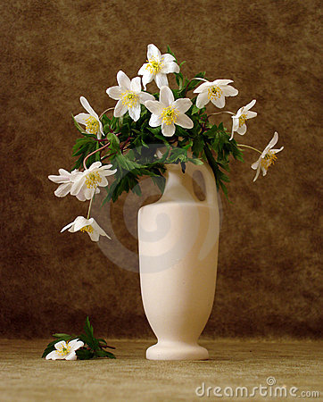 Free White Flowers In Vase Stock Photography - 2400962
