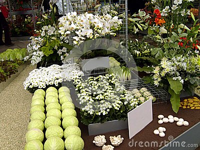 White Flowers and Vegetables Display