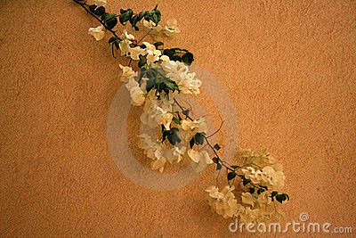 White flowers on a wall
