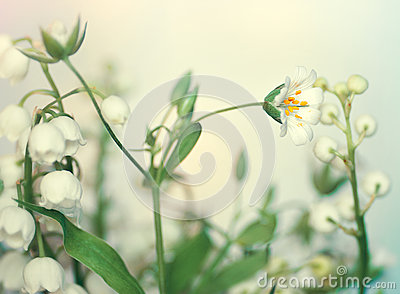 White forest flowers