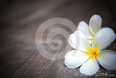 White  frangipani flowers on brown  wood texture w