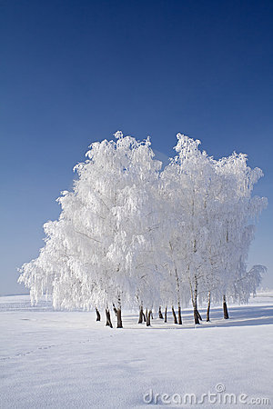 Free White Frost Tree Cluster And Blue Skies Royalty Free Stock Photography - 3938807