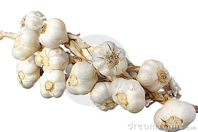 White garlic isolated