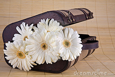 White Gerber Daisies in Vintage Suitcase