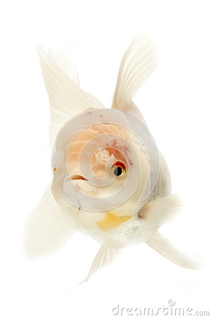White Goldfish