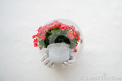 White hand holding red flowers on the pot