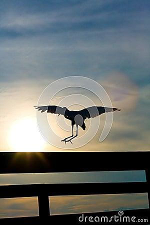 White Heron Landing