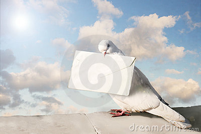 White Homing pigeon