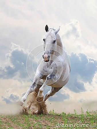 Free White Horse Stock Photos - 17682383
