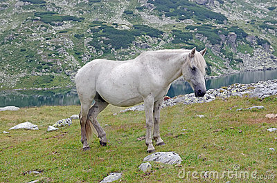 White Horse Royalty Free Stock Photos - Image: 20910678