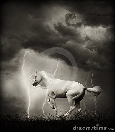 Free White Horse Stock Image - 6256841