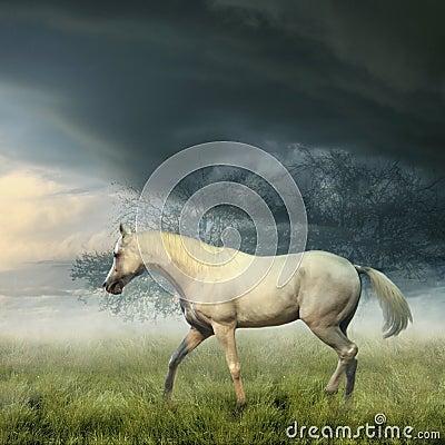 Free White Horse Stock Images - 8110344