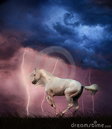 Free White Horse And Thunderstorm Royalty Free Stock Image - 6255936