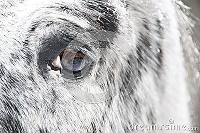 White horse eye close up